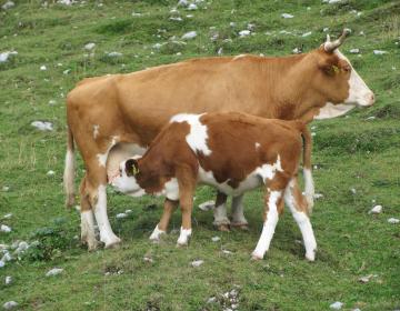 Identifikacija in registracija živali v času epidemije covid-19