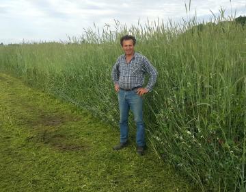 Prezimna mešanica sedmih rastlin za zeleno  gnojenje in povečanje humusa v tleh