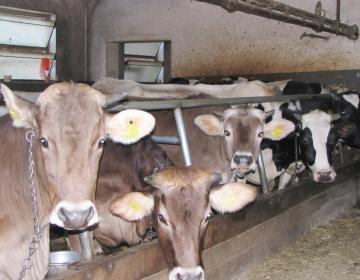 Izvajanje mlečne kontrole v času epidemije